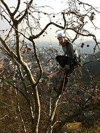 Hansch-Baumpflege